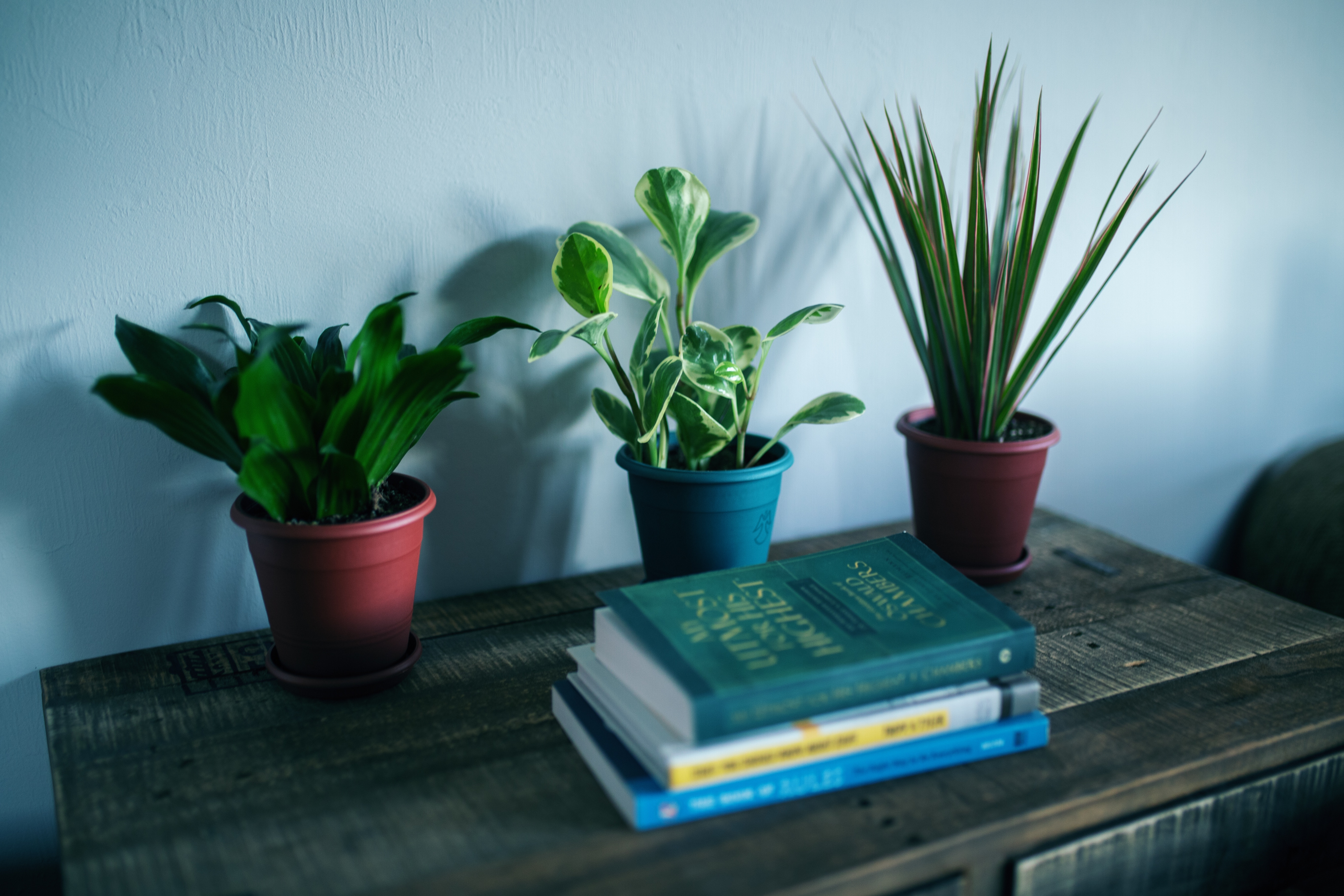table with plants and books